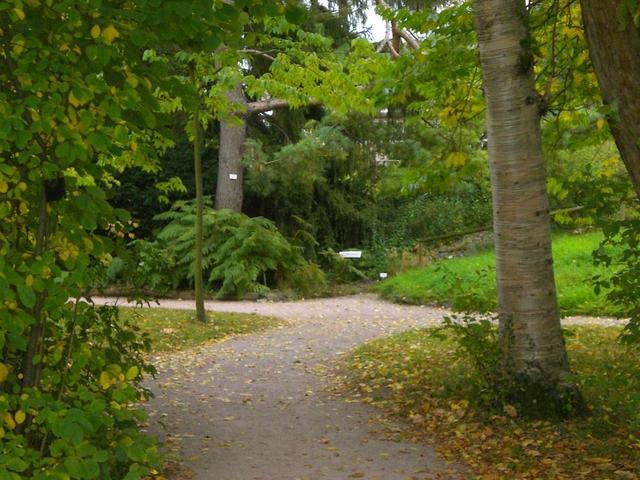 Der Botanische Garten in Heidelberg