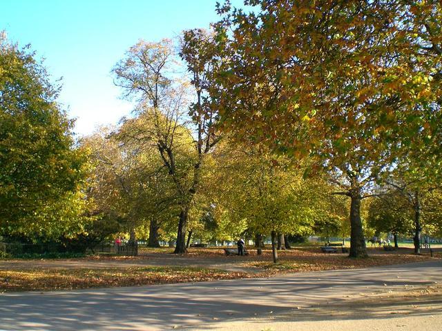 Bäume im Hyde Park