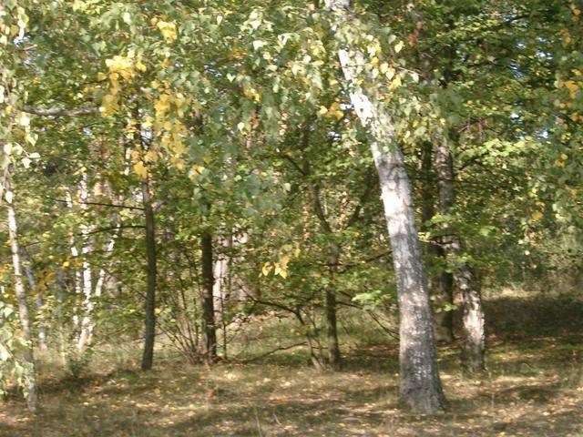 Im Dossenwald