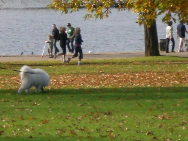 Jogger im Hyde Park