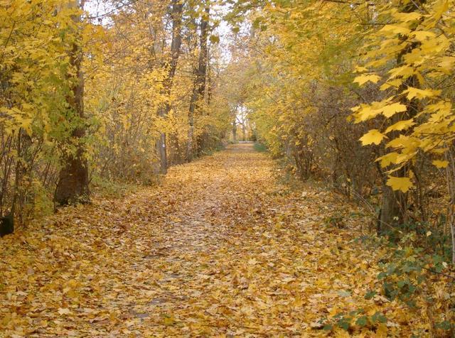 Spazierweg im Dossenwald