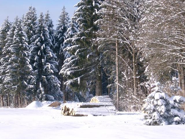 das Rotmoos im Winter