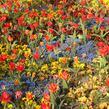 Blütenpracht im Luisenpark
