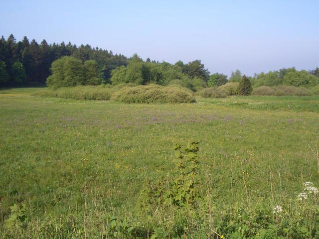 Natureindrücke in Hoherodskopf