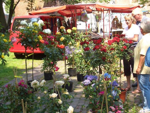 herrliche Rosen beim Wochenmarkt auf dem Norder Marktplatz