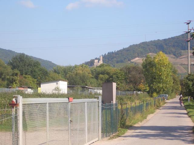 Radweg von Ladenburg nach Schriesheim