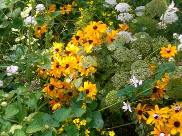 Blumen im Friedrich-Ebert-Park