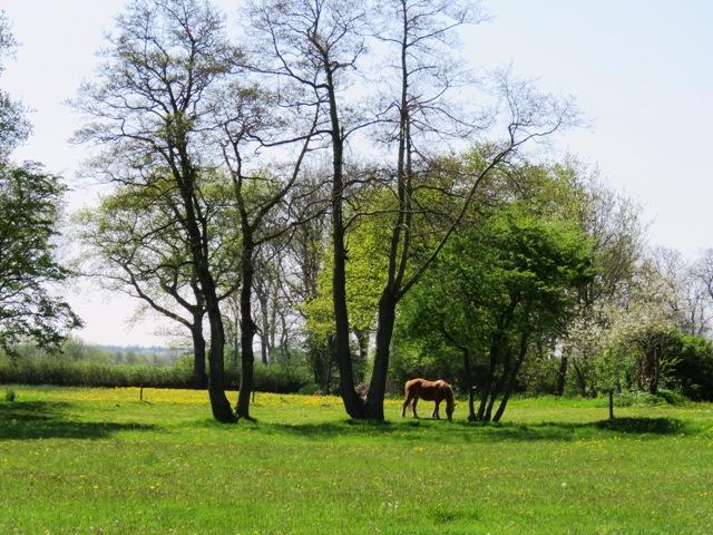 Landschaft Holtgast