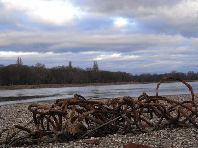 Schwemmgut am Rhein-Strand