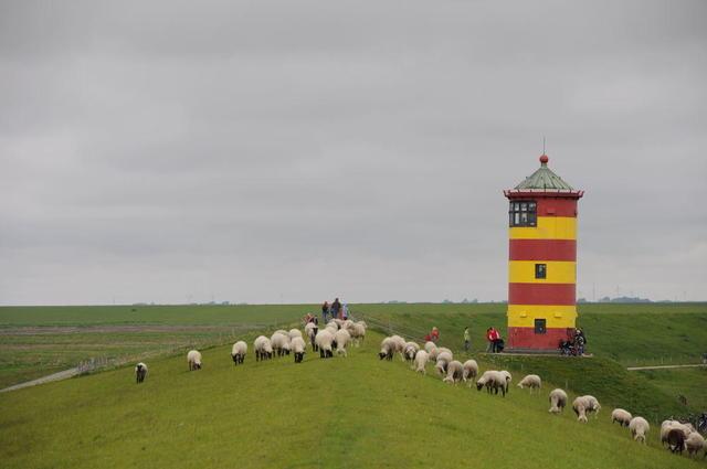 Schafe am Leuchtturm