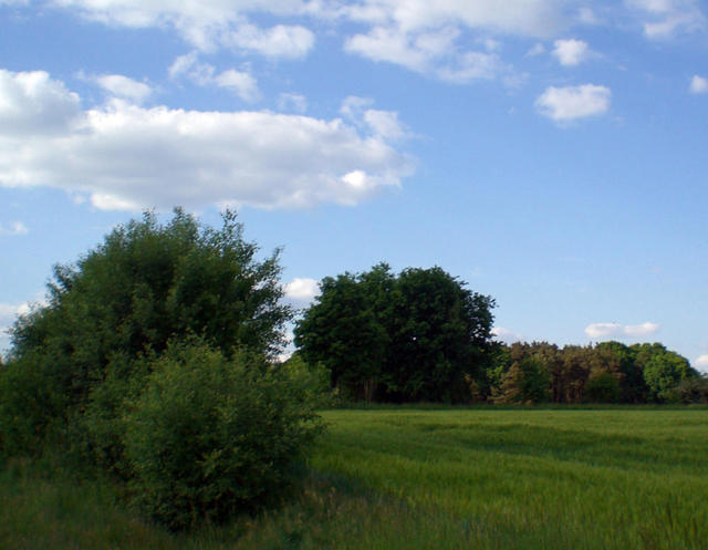 Wallhecken